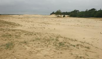 Zandverstuiving op de Veluwe. Foto: Leo Linnartz/ARK Natuurontwikkeling
