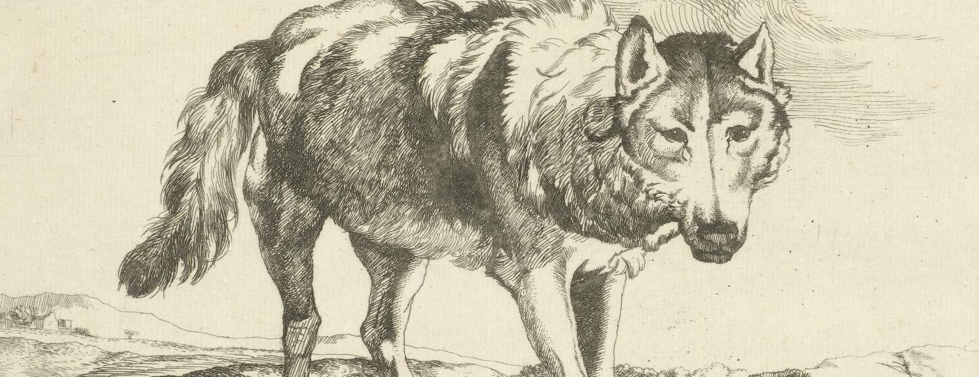 Wolf Collectie Rijksmuseum