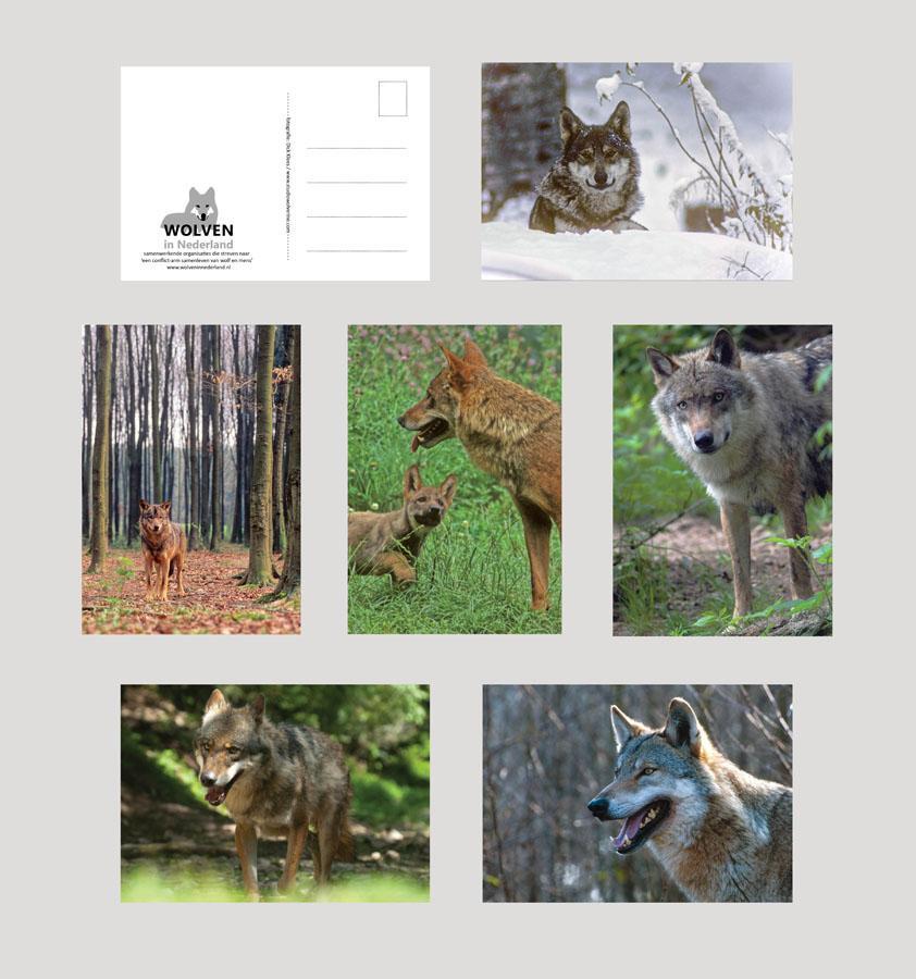 Ansichtkaarten wolf
