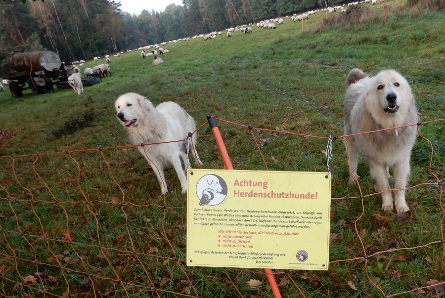 Bescherming van vee