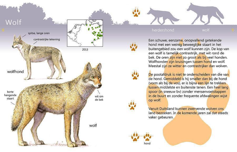 Rooidieren app - wolf