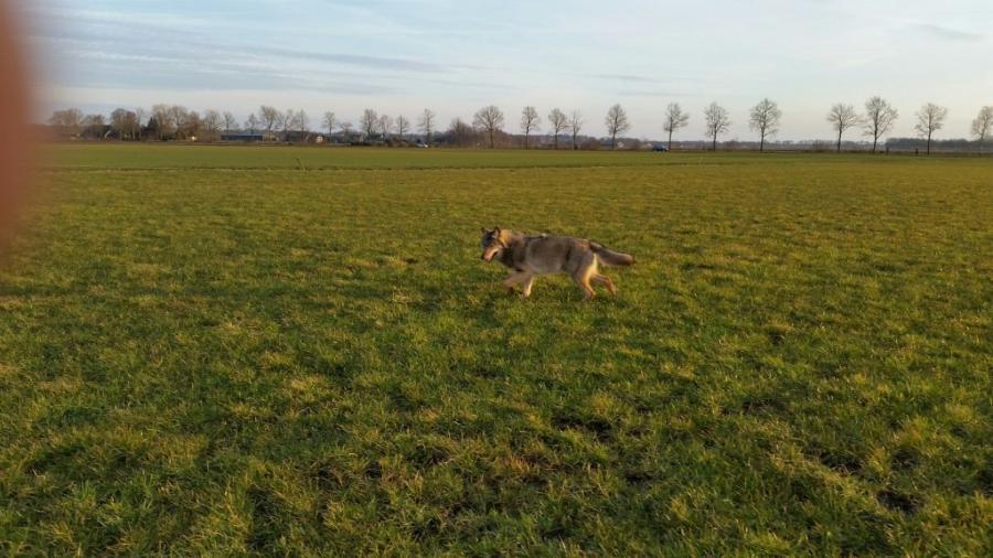 Wolf Drenthe Foto Robert Vlieghuis